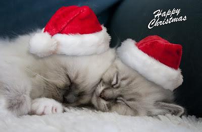 Gatitos deseando feliz navidad