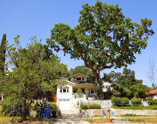 Home with Oak Tree on 12th St in Paso Robles, © B. Radisavljevic