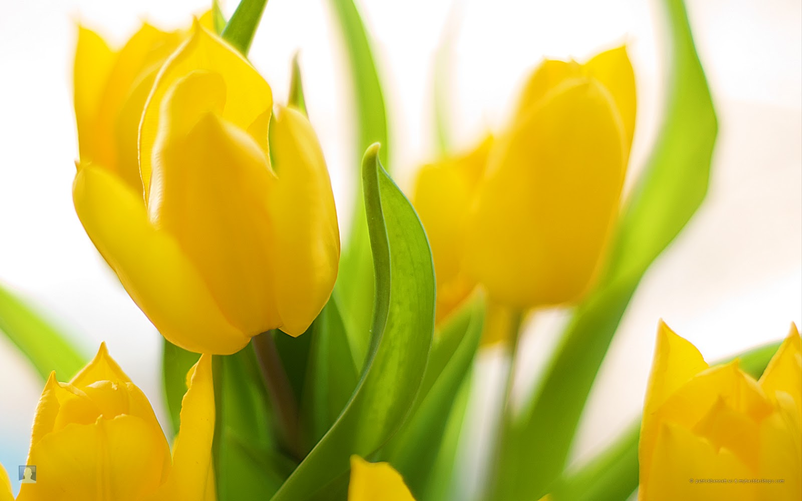 wallpapers spring flowers background