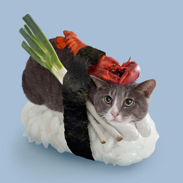 сделали из кошек суши