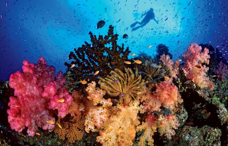 Prirodne ljepote - Veliki koralni greben Great+Barrier