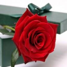 Red Rose  Love in a Box