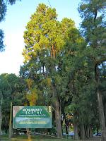 Arbol parque Prado montevideo Uruguay