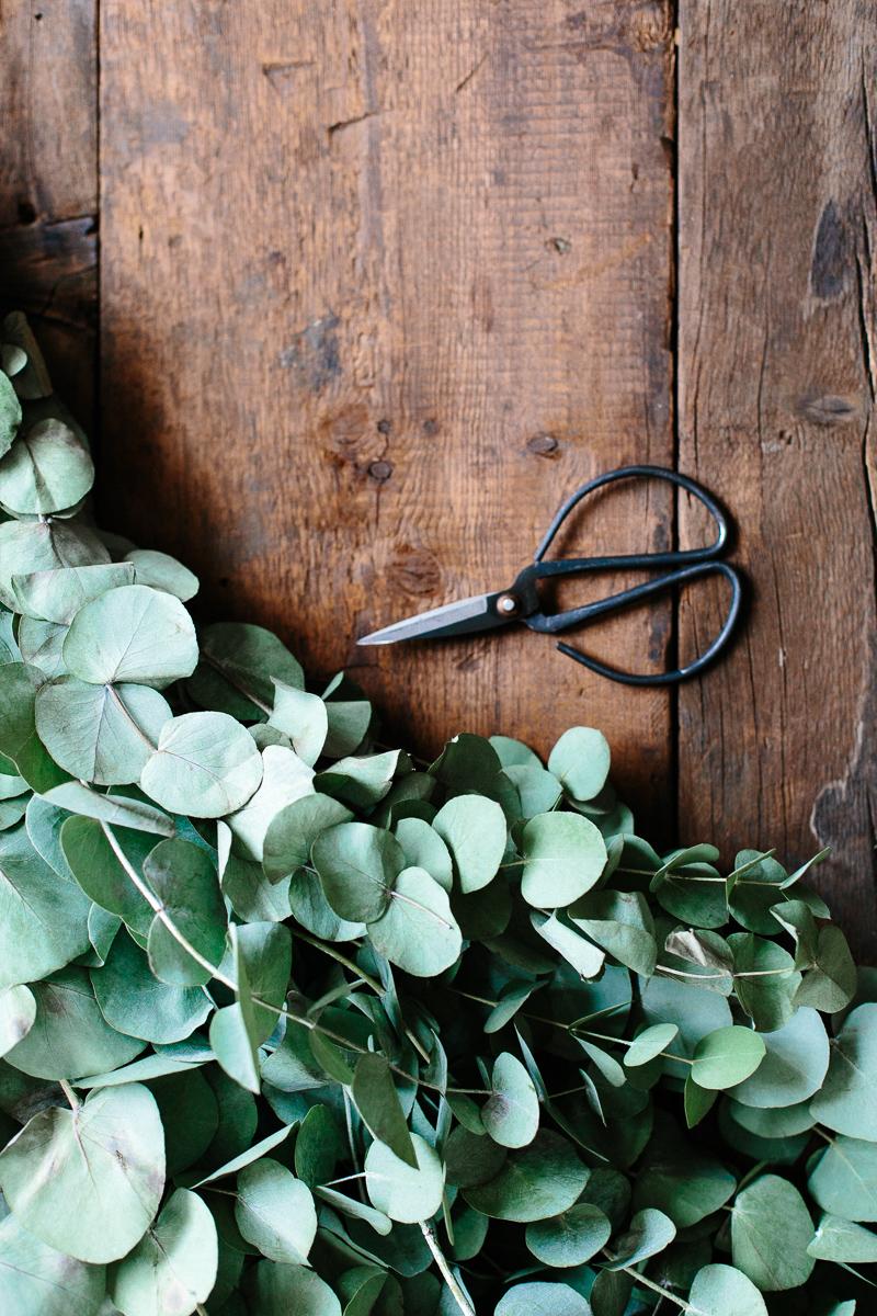 eukalyptuksen oksat ja sakset