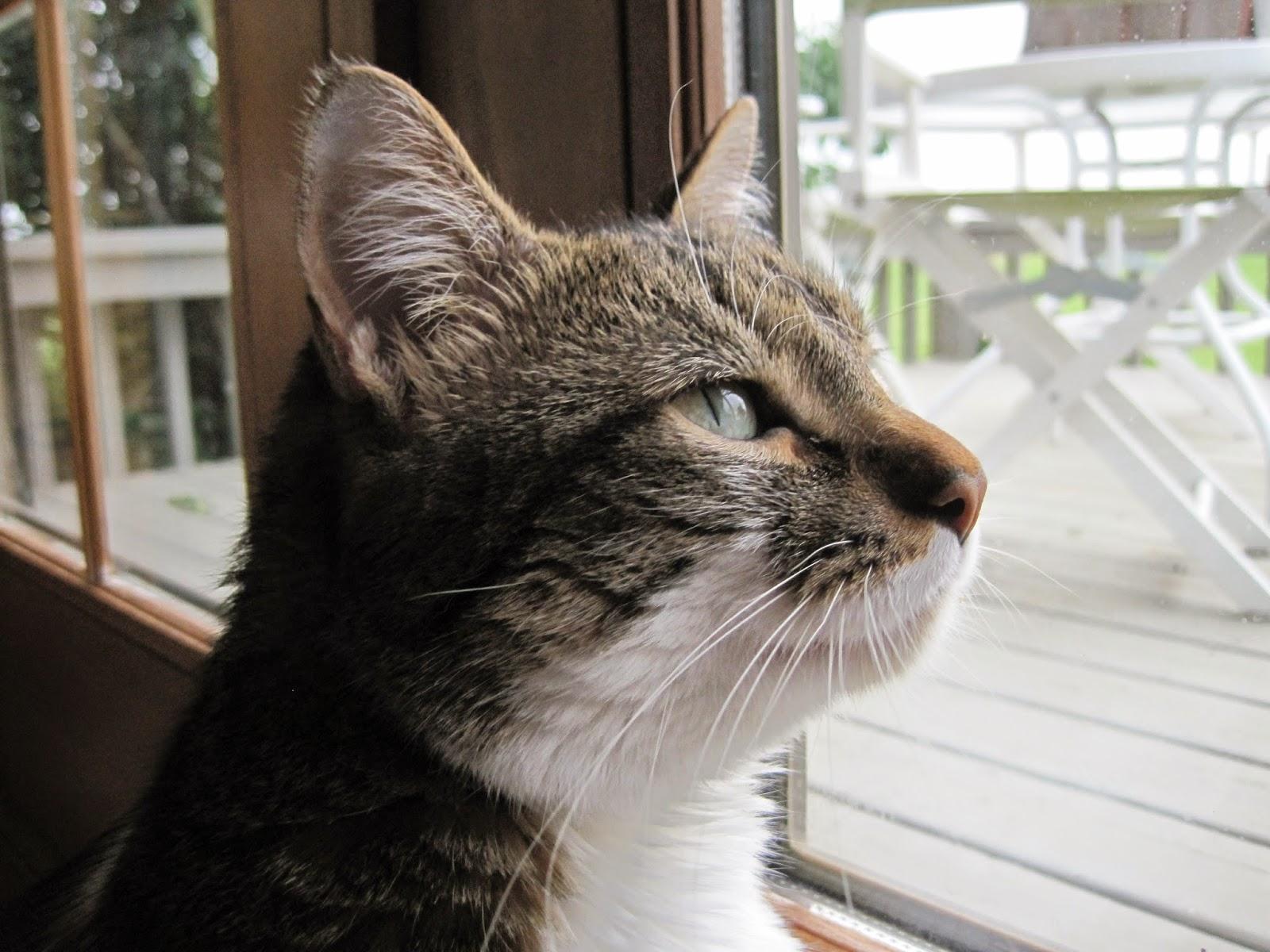 Ponder cat... | memes.com