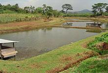 Beautiful sceneries of kenyan republic sagana fish farm for Georgia fish farms