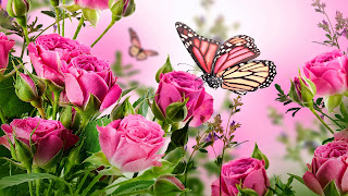 Pink Rose with Butterfly Desktop Wallpaper