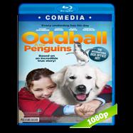 Oddball (2015) BRRip 1080p Audio Dual Latino-Ingles