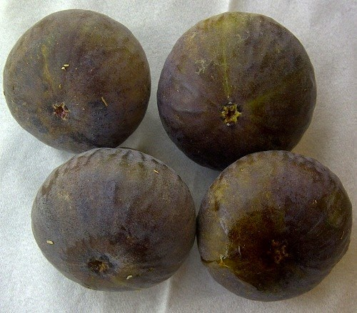 Figs : Brown Turkey