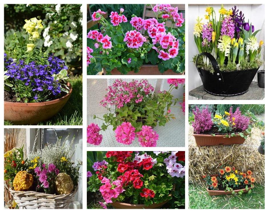 Цветя в контейнер
