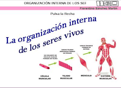 external image organizaci%25C3%25B3n.png