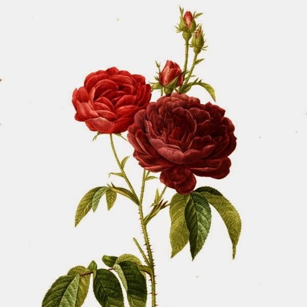 History And Knowledge Simbol Mawar Dalam Budaya Agama Dan Sufisme