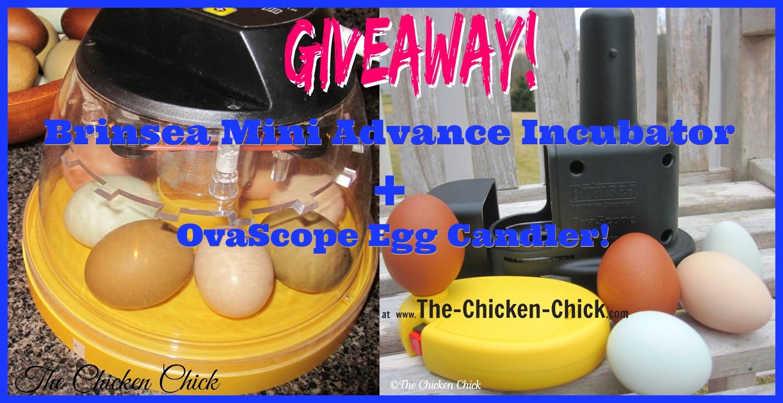 Brinsea Mini Advance Incubator AND OvaScope Egg Candler GIVEAWAY!