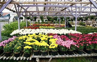 Kebun Bunga Cihideung di Bandung