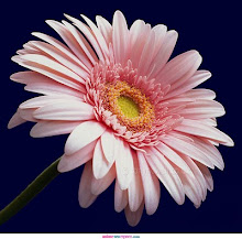 Esta flor es para tì