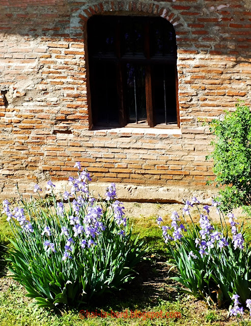 flori si fereastra mogosoaia