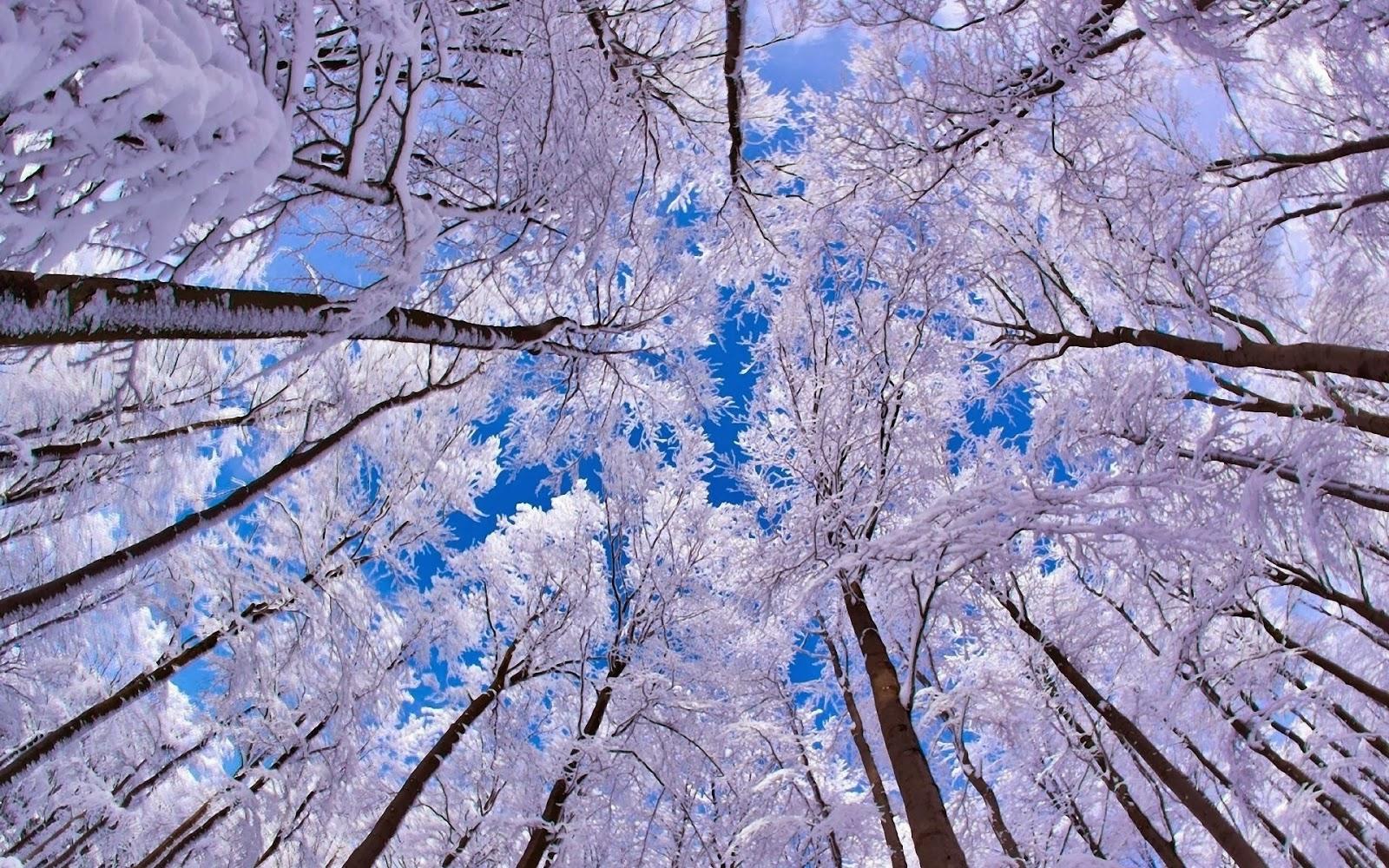 Фото зима 2014 зима 2013 2014 фотолет зима