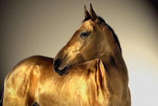 golden horse akhal teke