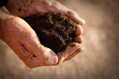 Forever healthy and young why gardening makes you happy for Things in soil