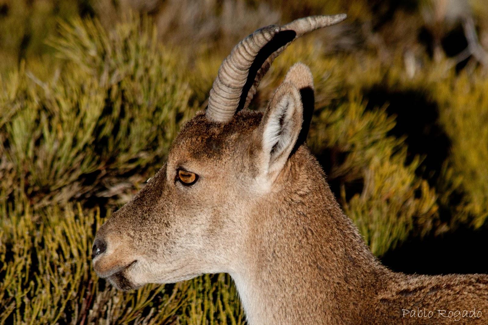 dibujos y fotos de animales herbivoros Buenos enlaces - fotos animales herbívoros