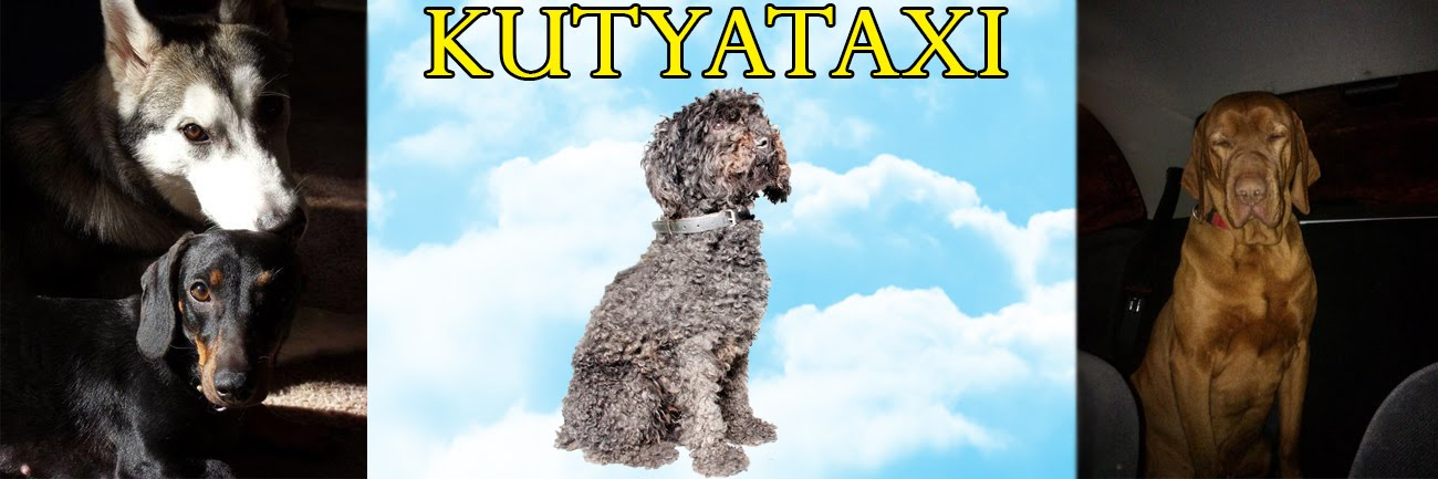 Kutyataxi