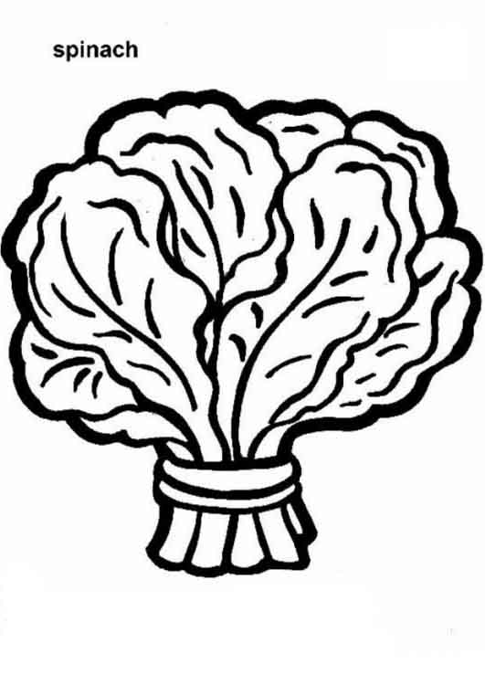 spinach coloring page - spinach vegetable coloring pages