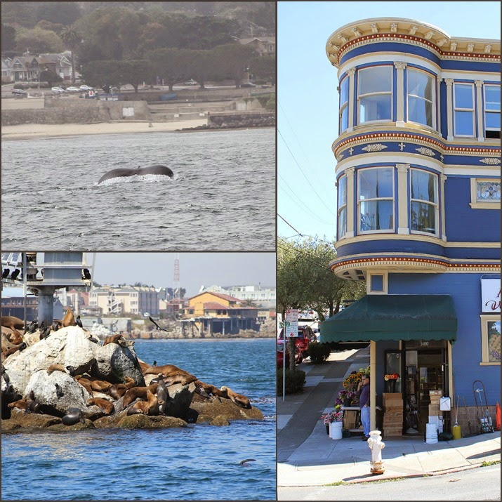 Whale Watching und Robben in Monterey, Haus in San Francisco