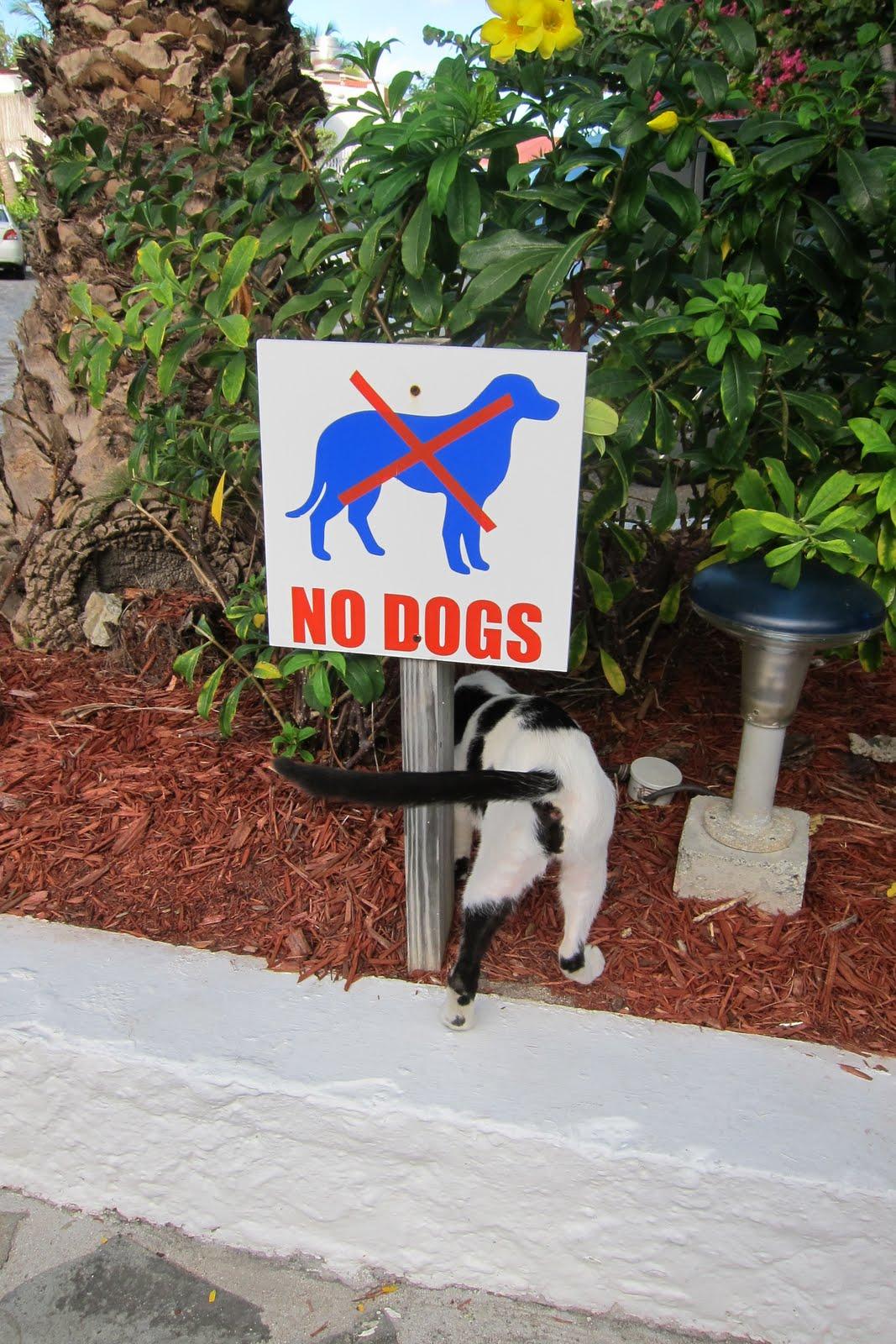 http://4.bp.blogspot.com/-fvZYK3M1_c8/TXIw0-DQIvI/AAAAAAAABu0/KE8rBtb94GQ/s1600/075_No_Dogs_Just_Cats.JPG