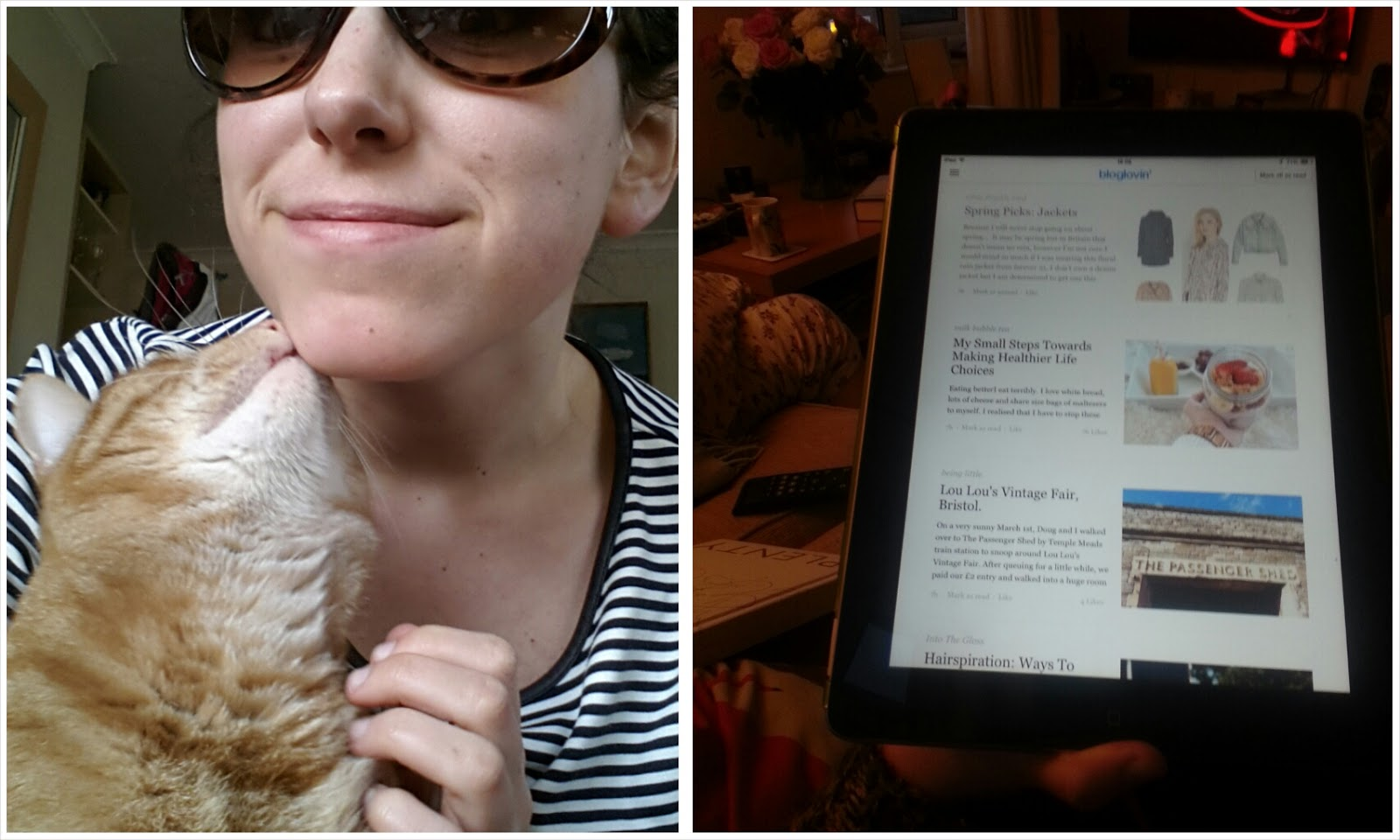 Sunglasses, cat and blogs