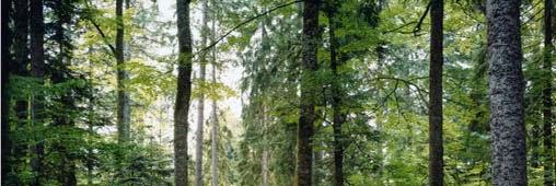 plantations-de-france