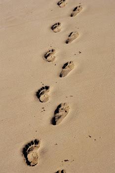 Por Jehová son ordenados los pasos del hombre, y él aprueba su camino.