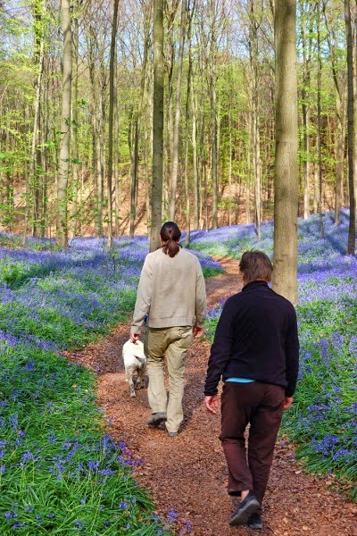 Foto Fenomena Alam Hutan Biru Belgia Aneh Bin Ajaib