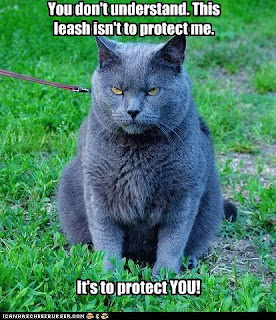 Why Can Cats Not Have Prednisone