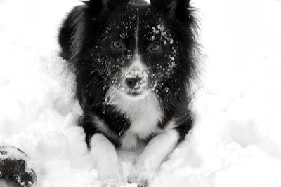... that I don't love my dog. It's just that I don't love my dog