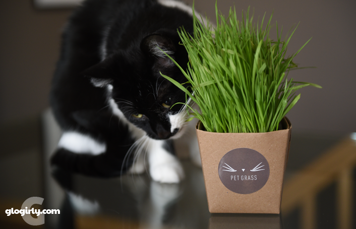 Katie with fresh Whisker Greens pet grass in decorative sleeve
