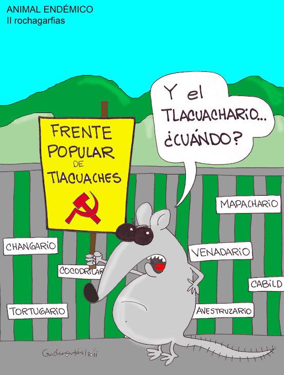 TLACUACHE; ANIMAL ENDEMICO EN ORIZABA