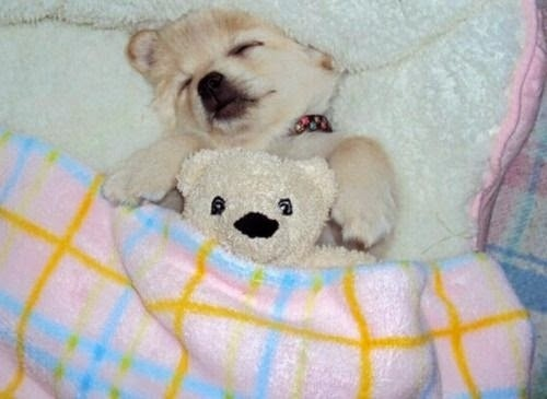 sleeping animal pictures1