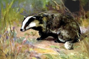 PLEASE CLICK THE PICTURE TO HELP STOP THE BADGER CULL