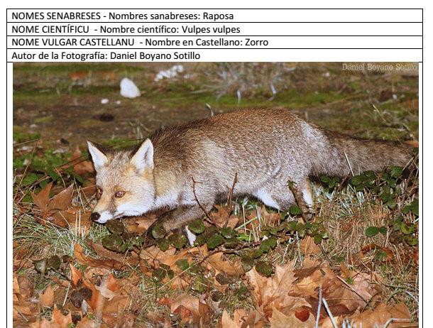 Senabria, la nuesa fauna