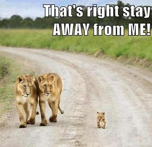 cute lion quotes