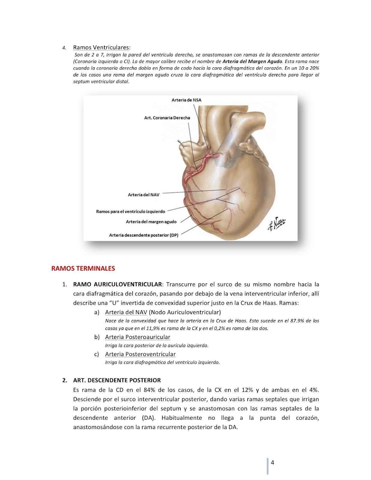 Cuadernos de Anatomía Quirúrgica: Circulación coronaria.