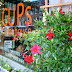 CUPS offers Up Events In February