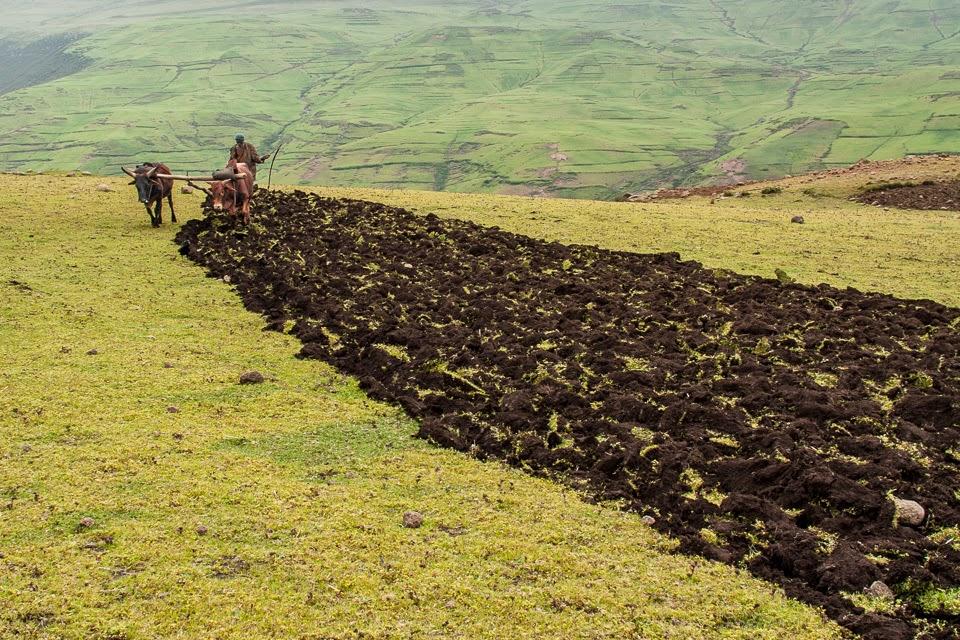 amhara földműves Gicsben