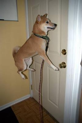 Cachorro que avua!!