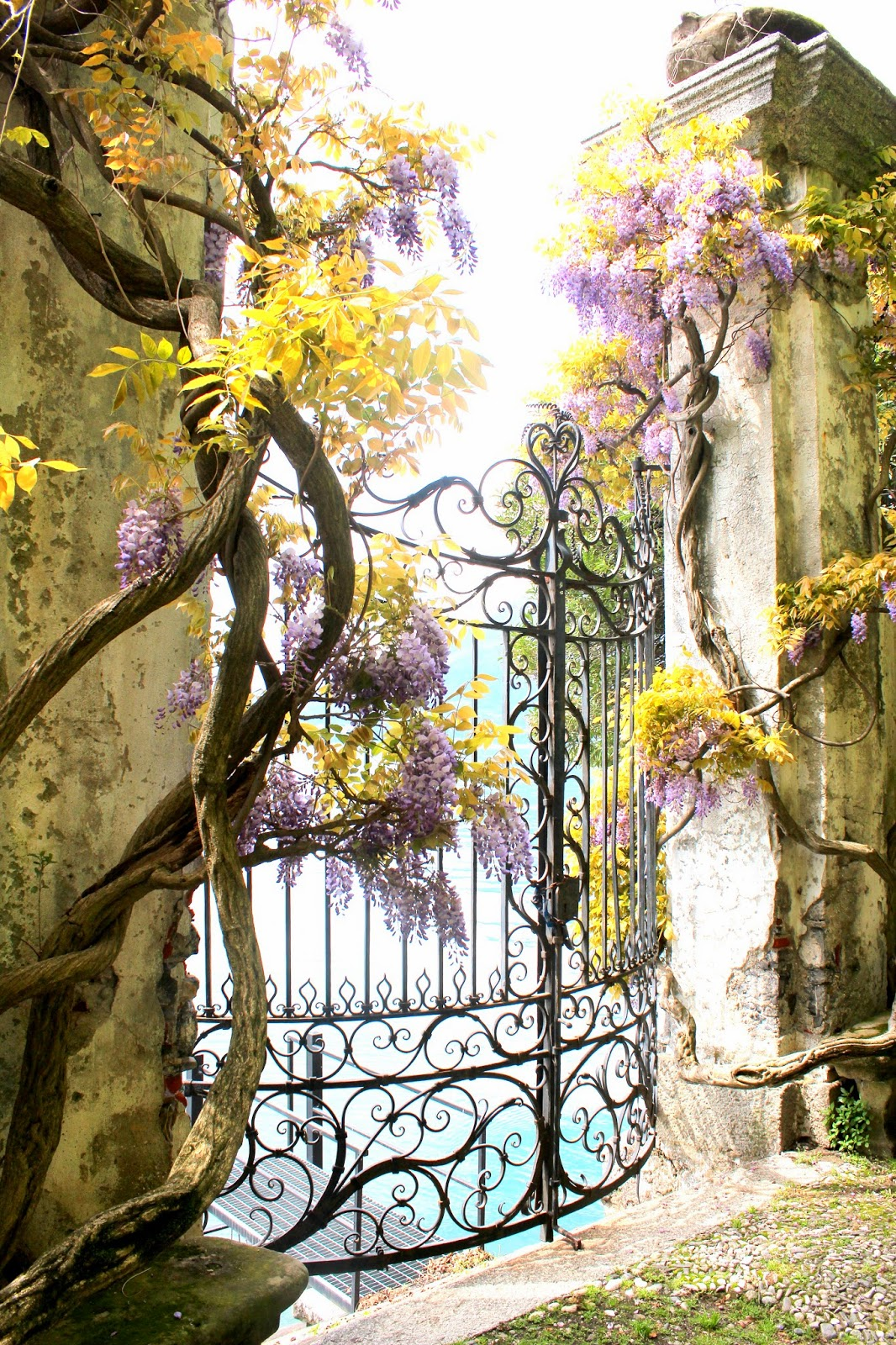Italian Garden with Wisteria; Lake Como