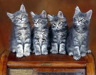 kucing comel1 Gelagat Si Comel