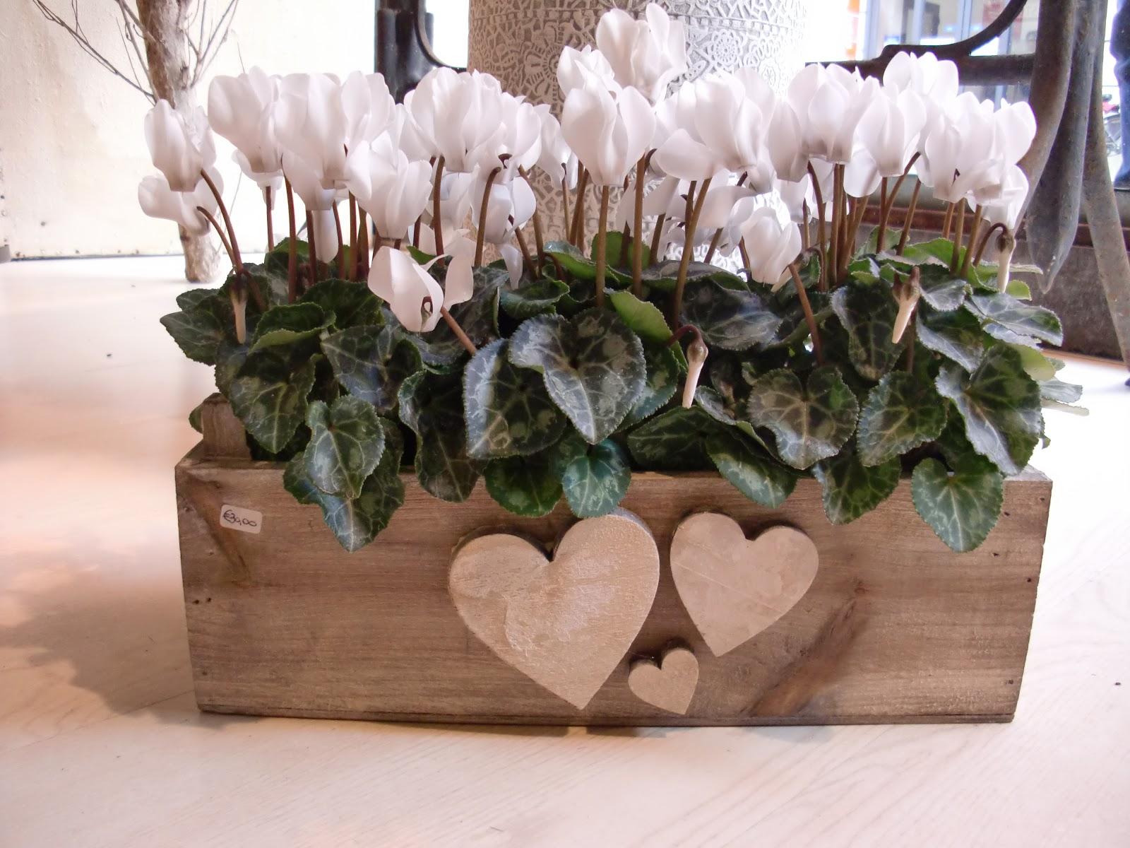 Ikebana fleurs spuntano i fiori tra la neve for Fiori con la e
