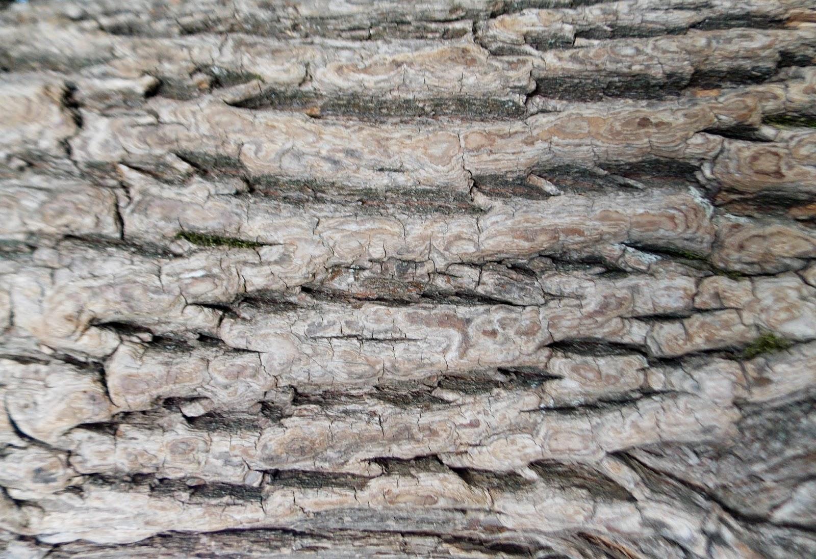 текстура коры дерева: