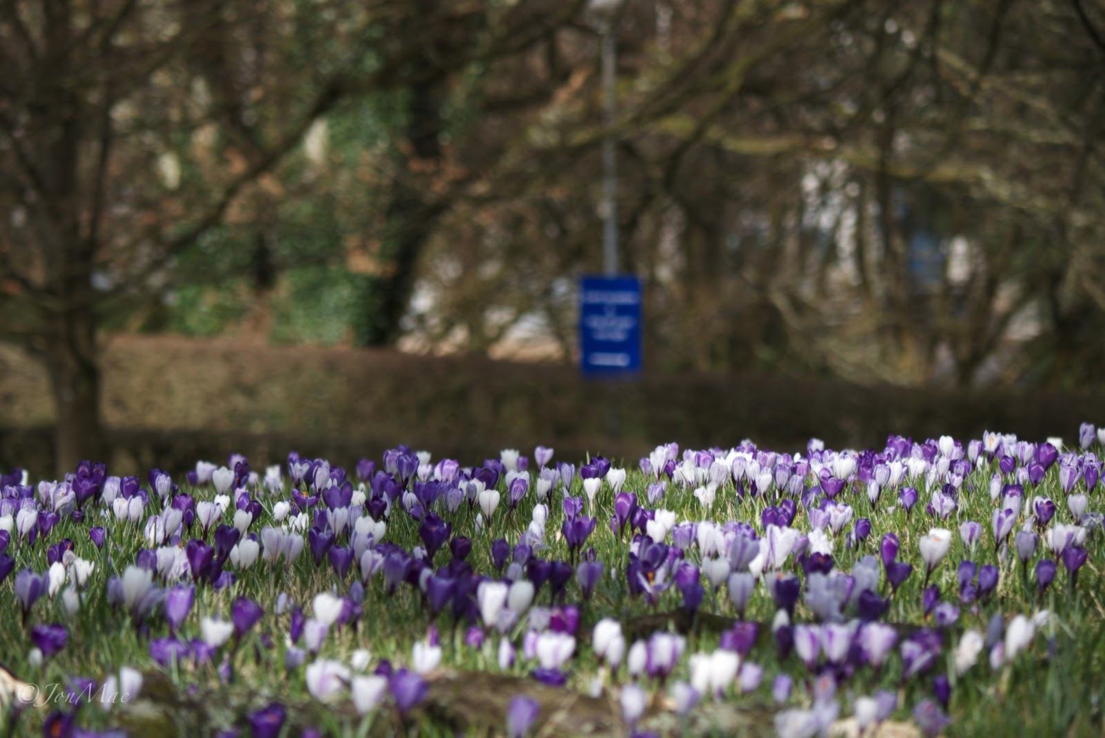 spring flowers+dartington+westcountry