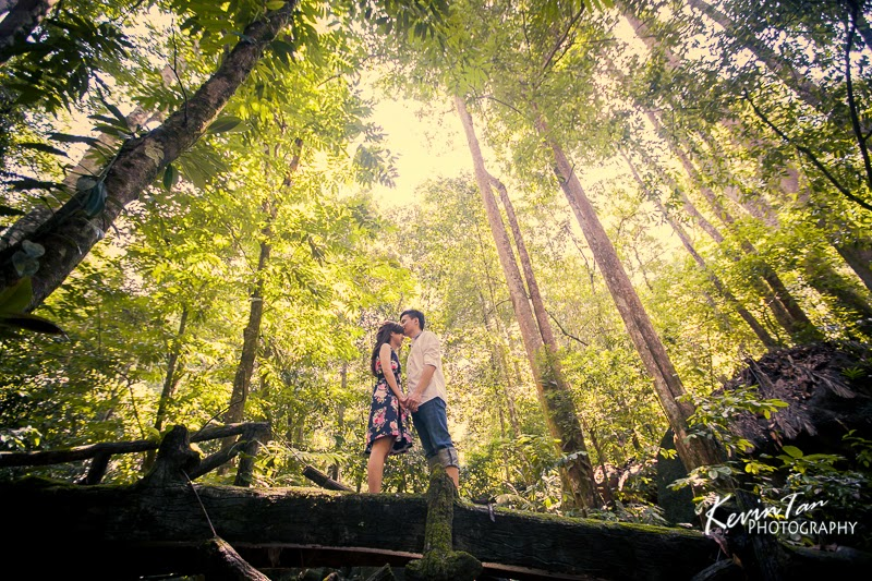 Pre wedding shoot location frim leaves of the trees form beautiful forest roof photo by kevin tan junglespirit Images